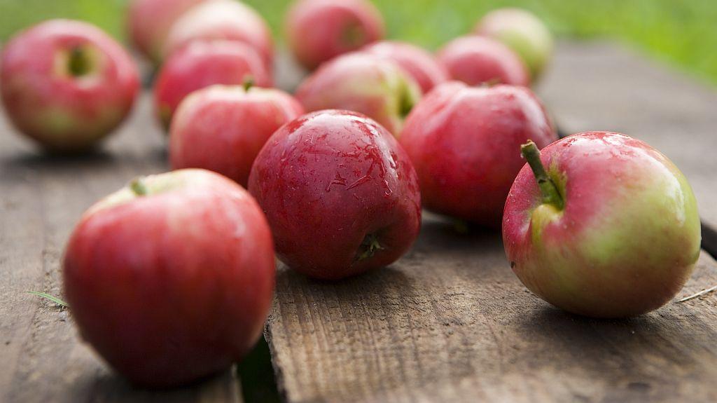 ÆBLEKINDER OG GRÆSKARLYGTER